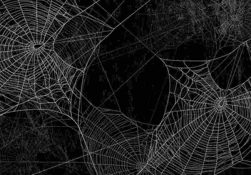 Spinnenseide zur Wundheilung für Silikonimplantate